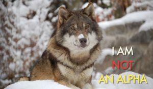 wolf 18nepvbm5hkxejpg